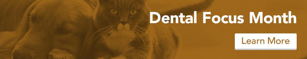 homepage_dental_brown