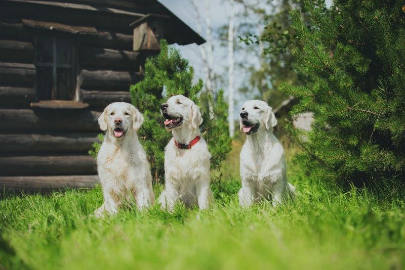 Are Treadmill for Dogs a Good Idea?