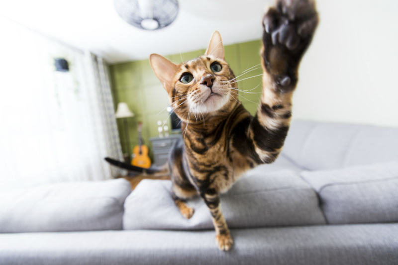 Tips for Indoor Cats